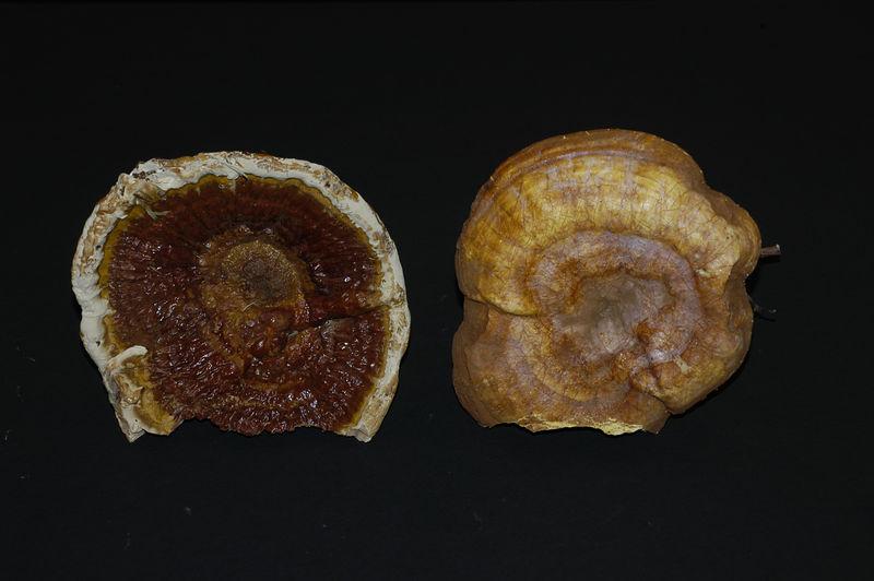 Mycology 051.jpg