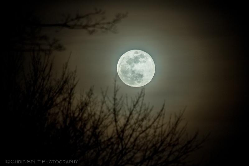 moon jan 31 2018 wm.jpg