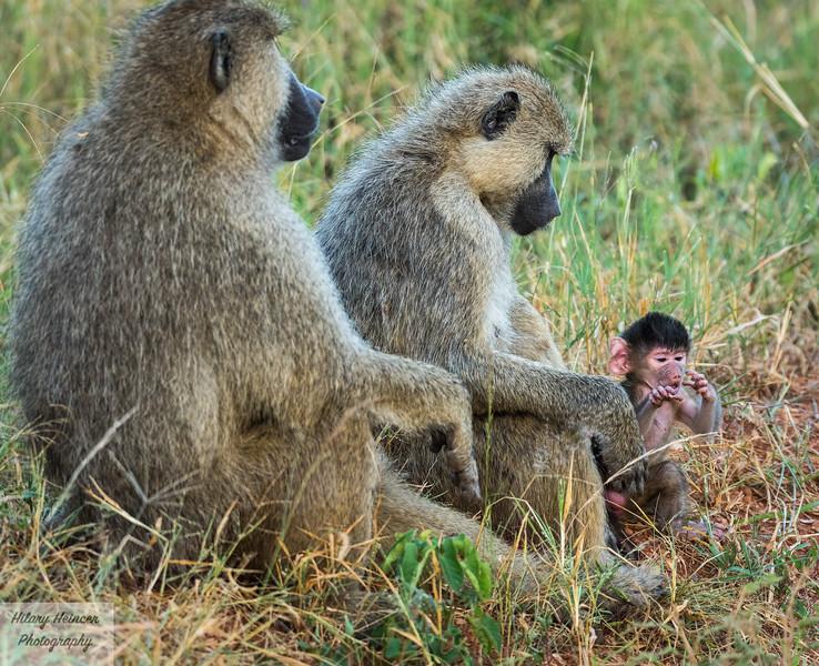 Kenya Wildlife-4.jpg