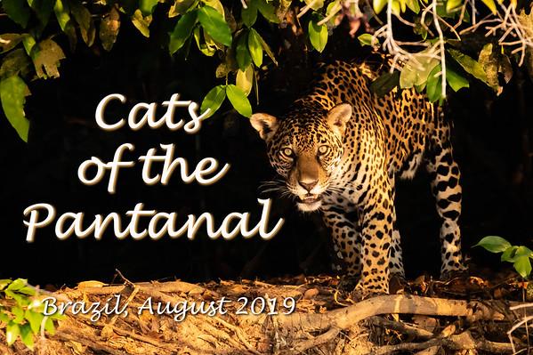 Cats of Pantanal