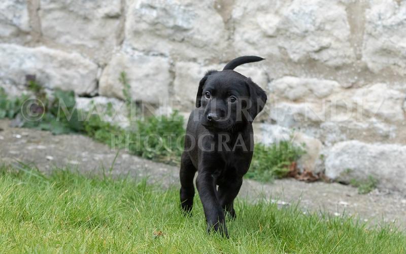 Weika Puppies 24 March 2019-6434.jpg