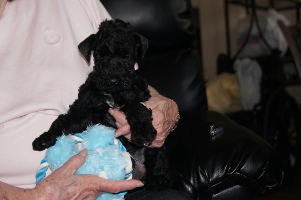 Harper McCoy puppies 5 weeks
