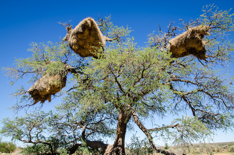 Namibia-3847.jpg