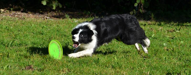 Frisbee 16.10.16