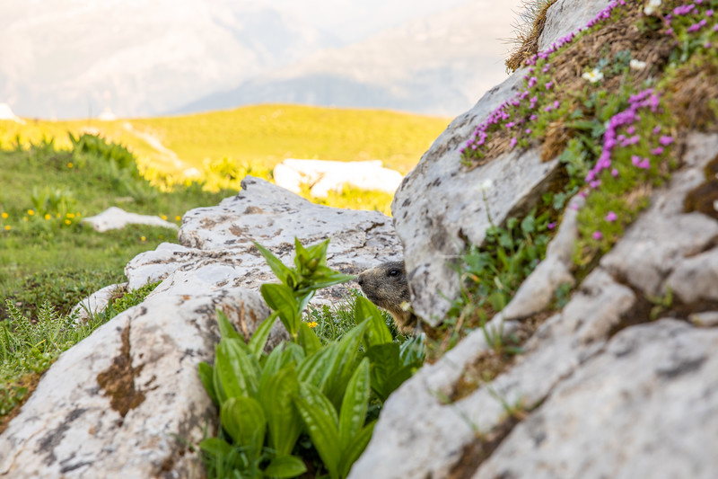 Cufercal-und-SB-Klettern-2019-5649.jpg