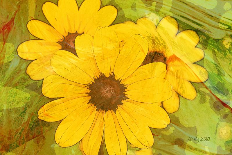 FlowerArt_Daisies_Yellow_0531.jpg