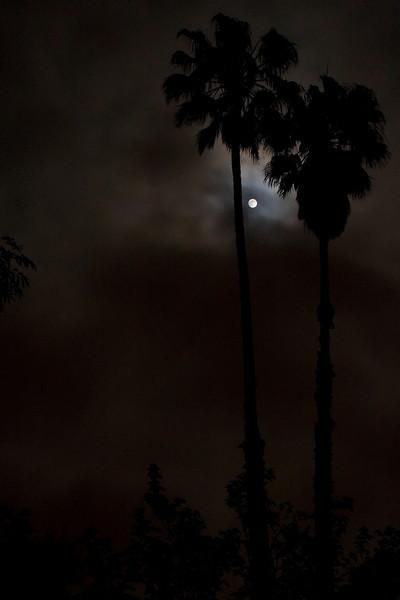 Moon Night_09-8.jpg