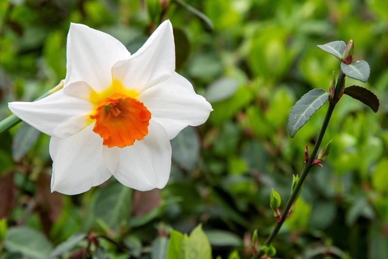 Garden 1, 065.jpg