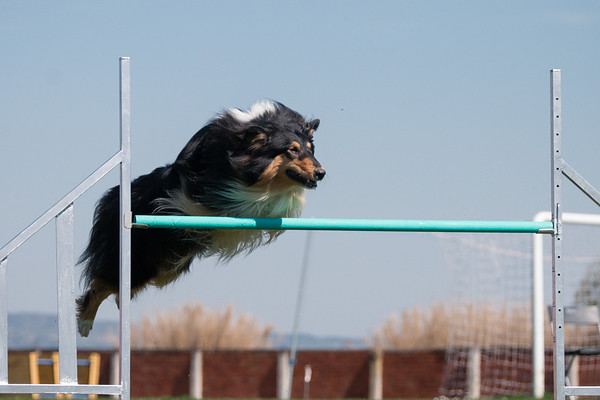 24-26 March 2017 Mediterranean Dog Challenge 2017 by Drive Unlimited - Canine Sports Center