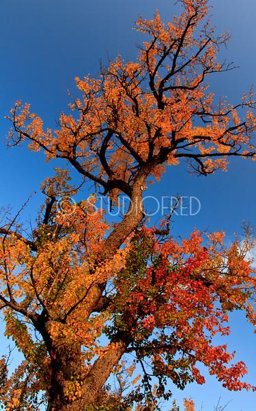 Autumn Colours around Stuttgart