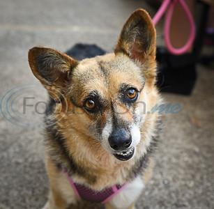 SPCA Pints & Pups by Alexandra Mathews-Woodcock