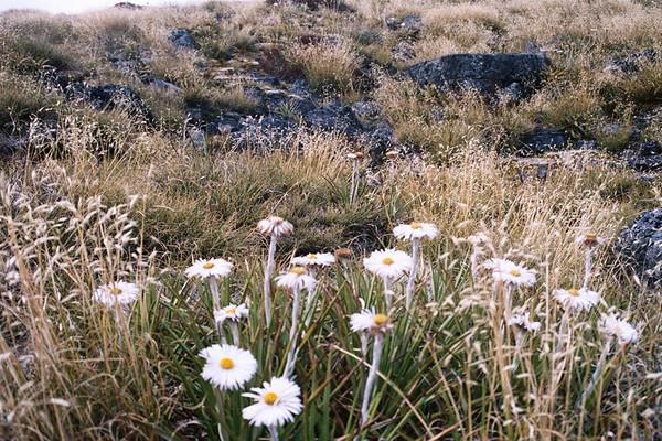 Sharyn & Raj walk the fiordland NZ