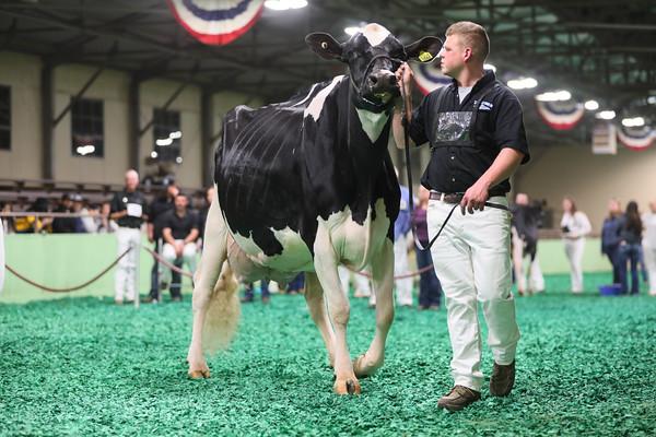 Holstein Ring Shots