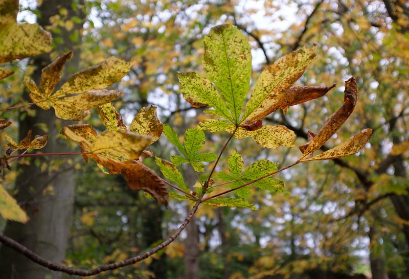 Autumn leaves in Durham