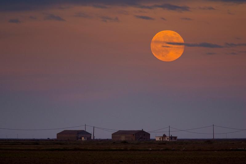 Full moon over a rural landscape, Doñana marshland area, town of Aznalcazar, province of Seville, autonomous community of Andalusia, southwestern Spain