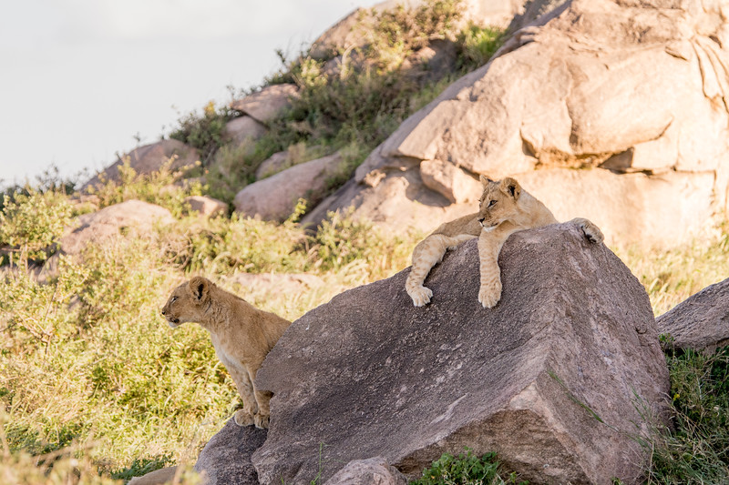 Tanzania_Feb_2018-603.jpg