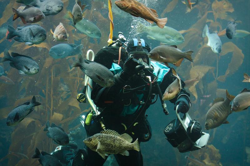 Monterey Bay Aquarium-2560.jpg