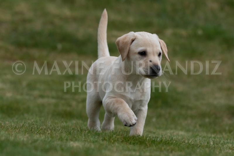 Weika Puppies 24 March 2019-6689.jpg