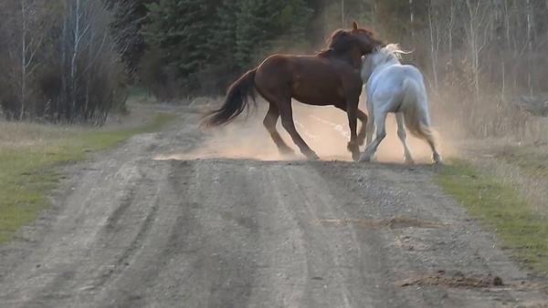 5-13-18 Video - White Spirit Fighting