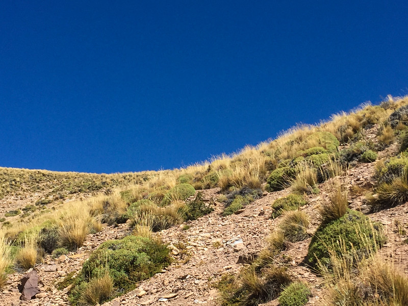 Patagonia18iphone-5033.jpg
