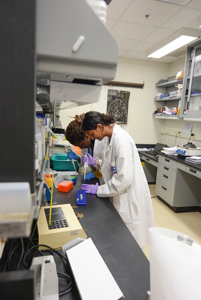 CHIRP 2019 labs021.JPG