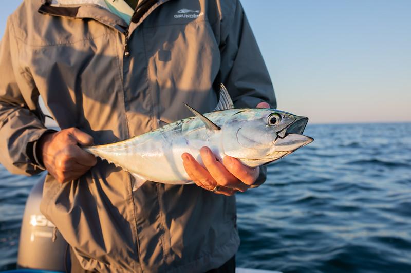 capecodfalsealbacorefishing.bencarmichael (6 of 13).jpg