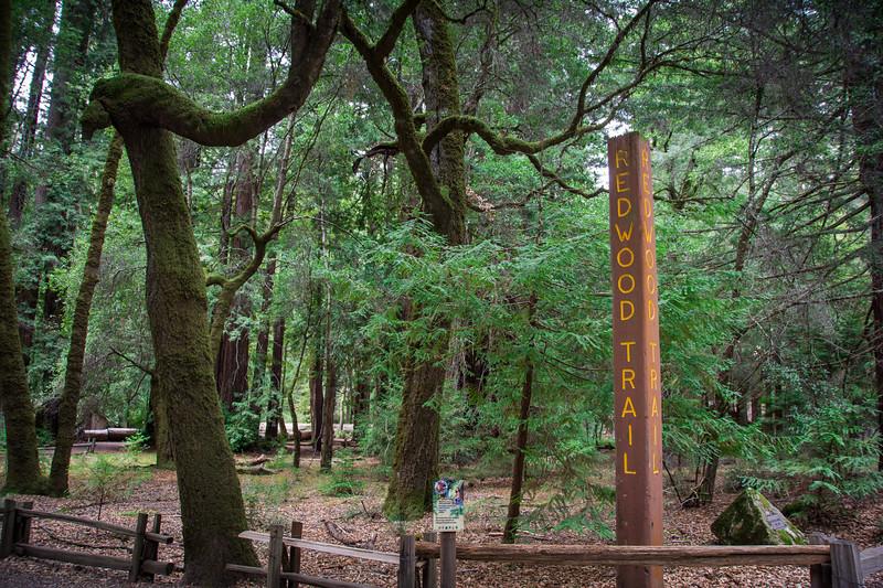Redwood-61.jpg