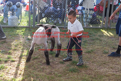 2016 Citrus Fair - PeeWee Showmanship