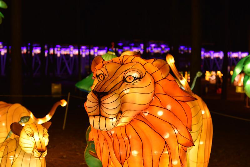 Chinese Lantern Festival-5311.jpg