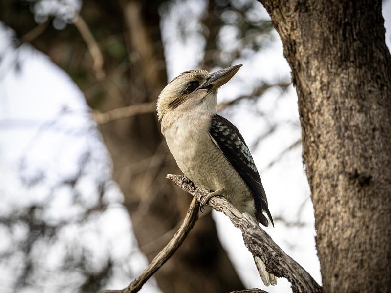 Birds 210819 053.JPG