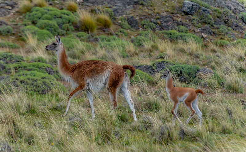 Patagonia_D850_1811_4033_1080p-wm.jpg