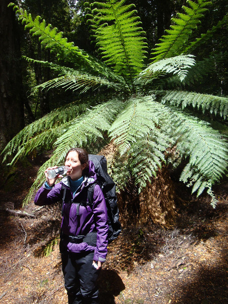 And even beautiful tree-ferns.