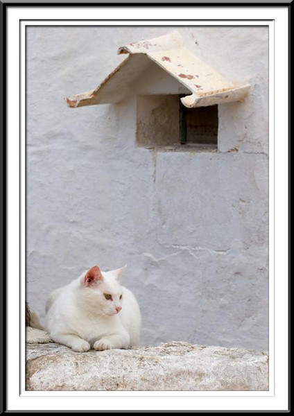 Cat (42762849).jpg