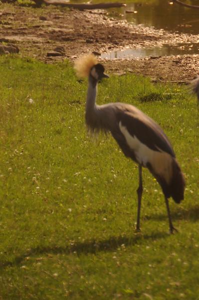 Carabana african safari Park8-09-1.jpg
