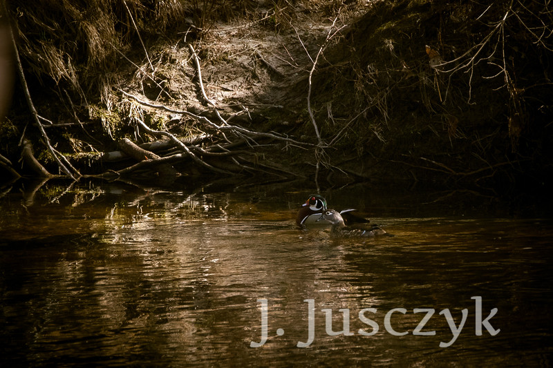 Jusczyk2021-5858.jpg