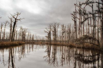 Brunswick Nature Park, NC