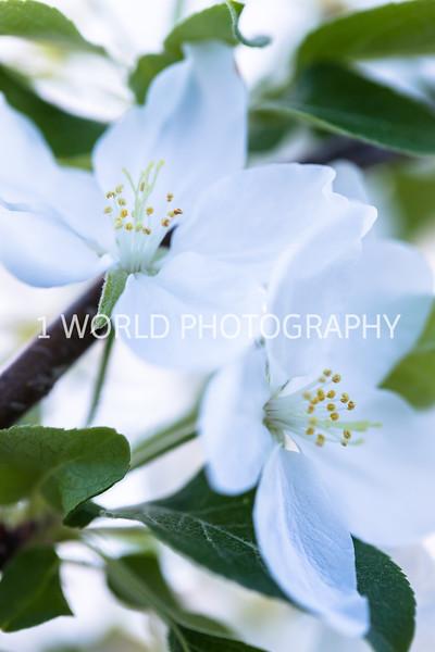 201905152019 Neighborhood Blossoms112--156.jpg