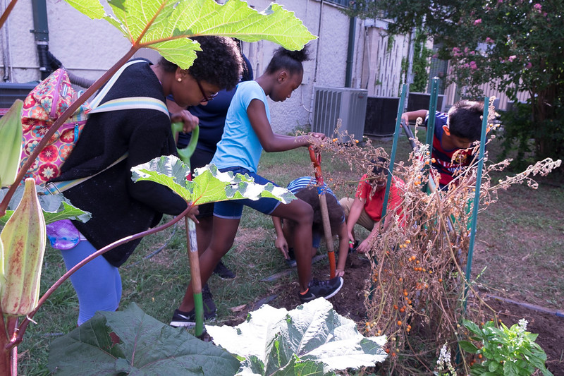 Weeding and picking the last few tomatoes in the summer heat at Montopolis Recreation Center.