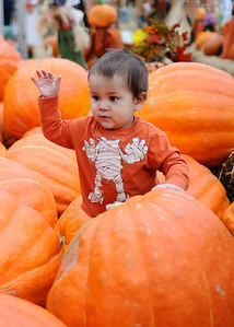 Picking the Pumpkin