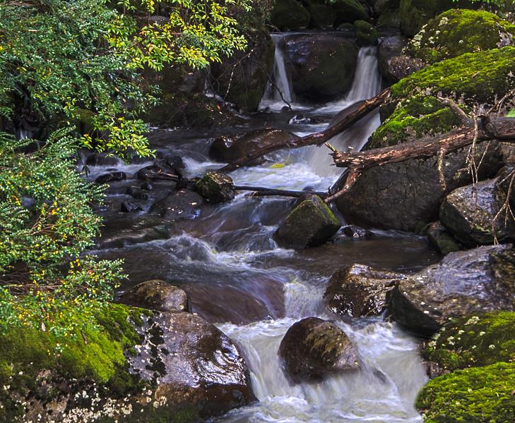 Taggerty Cascades.jpg