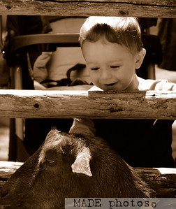 Zoo 08