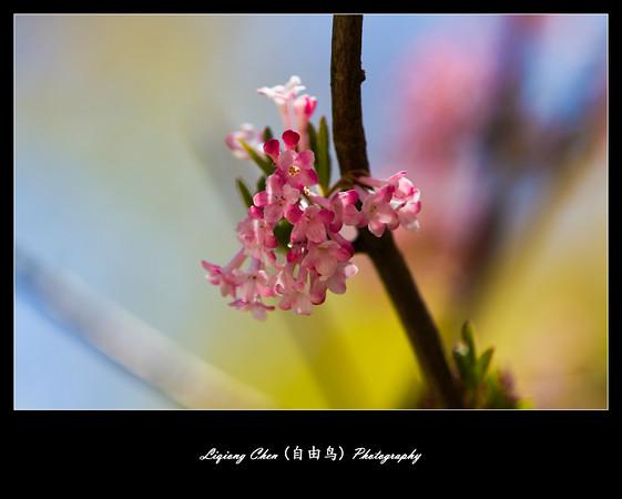 _MG_0532-M.jpg