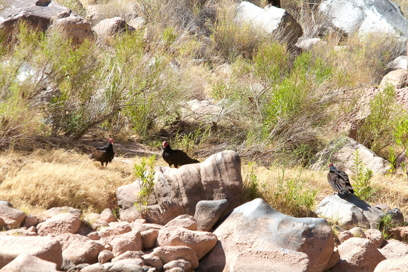 2014_Grand_Canyon_WHDW2_7D 88