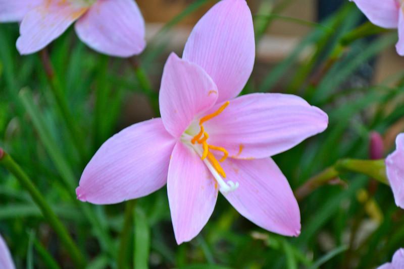 "4_Mensah_""The Pink Flower"".jpg"