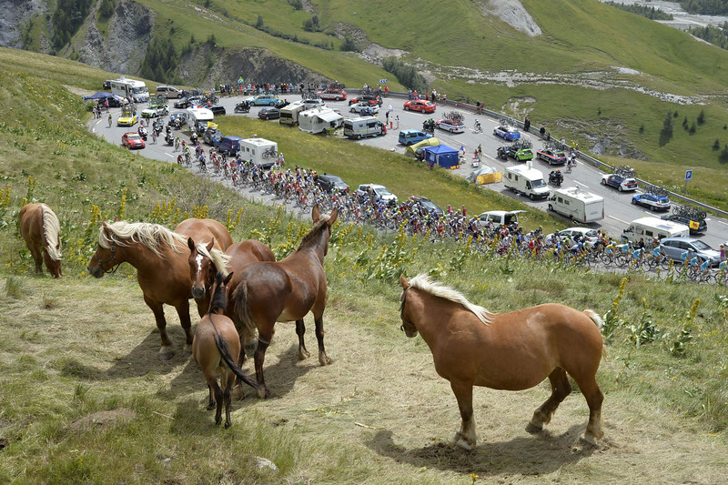 . Horses are pictured as the pack rides behind during the 177 km fourteenth stage of the 101st edition of the Tour de France cycling race on July 19, 2014 between Grenoble and Risoul, eastern France.  (ERIC FEFERBERG/AFP/Getty Images)