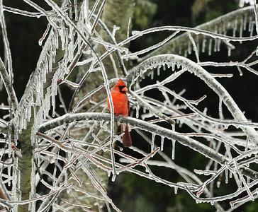 Winter Birds Gallery 1