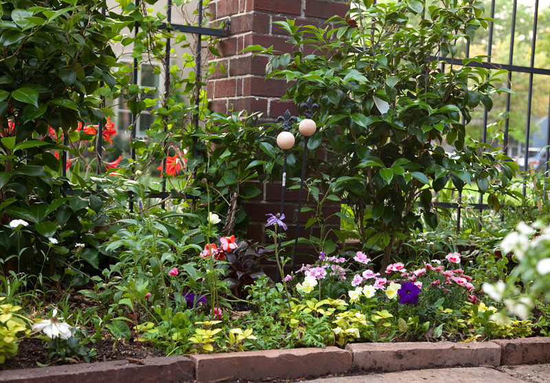 flowers2011aprilsun428.jpg