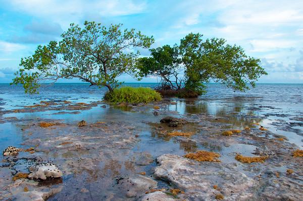 mangroves at the beach_edited-1new.jpeg