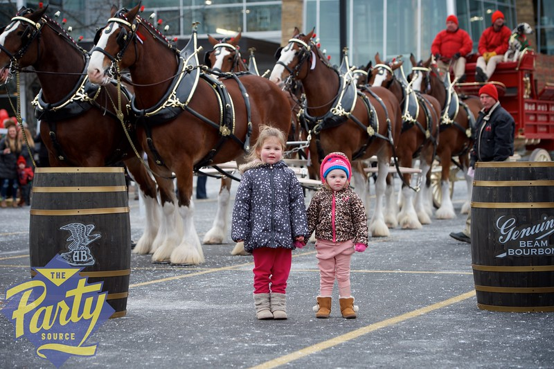 Clydesdale Portraits 44.jpg