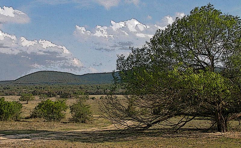 Mesquite in pasture poster edges.jpg